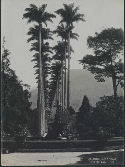 foto: Antonio Caetano da Costa Ribeiro. Jardim Botânico, c. 1914. Rio de Janeiro, RJ / Acervo FBN
